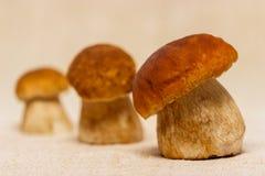 Boletus edulis mushrooms on table cloth. Boletus edulis mushrooms on rustic table cloth Royalty Free Stock Photos