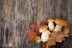 Boletus edulis, mushrooms on wooden background. Royalty Free Stock Image