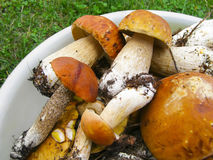 Boletus edulis. Summer still life. Ceps in the bowl Stock Photography