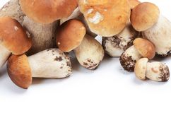 The boletus edulis on white Royalty Free Stock Photography