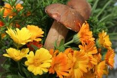 Boletus in fiori Fotografia Stock Libera da Diritti