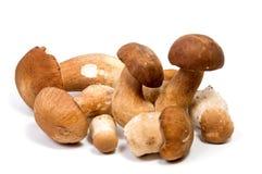 Boletus frais de champignon de forêt avec une jambe épaisse de champignon et un chapeau humide sur un aliment blanc de fond Photo stock