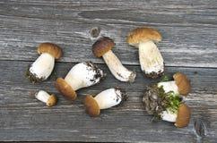 Boletus fresco del porcino del mushrom dei funghi del gruppo Fotografia Stock
