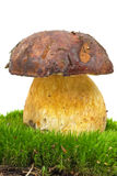 Boletus growning on the moss Royalty Free Stock Photography