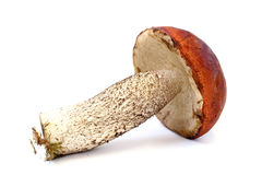 Boletus lies on its side Stock Images