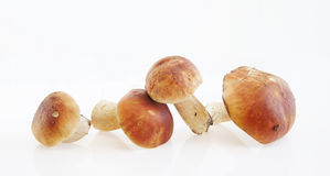 Boletus on light background Stock Photo