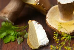 Boletus mushroom Royalty Free Stock Image