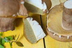 Boletus mushroom Royalty Free Stock Images