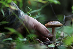 Boletus mushroom drop of water mushrooming Stock Photos