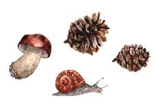 Boletus mushroom, grape snail and two pine cones. Watercolor on white background royalty free illustration