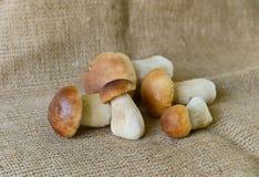Boletus mushroom Stock Photography