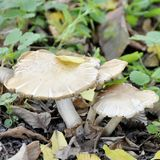 Boletus mushroom growing in a forest clearing. Boletus mushroom growing in a forest clearing Royalty Free Stock Photo