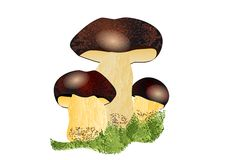 Boletus mushroom Royalty Free Stock Photo