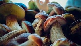 Boletus mushroom. Mushrooms boletus autumn forest mushroom stock photography