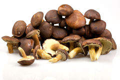 Boletus mushrooms Royalty Free Stock Photo