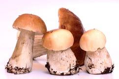 Boletus mushrooms Royalty Free Stock Images