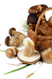 Boletus Mushrooms Stock Photos