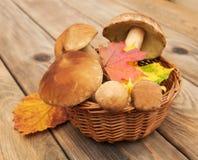 Boletus mushrooms in a basket Stock Photos