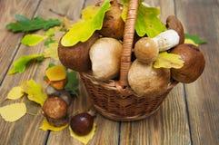 Boletus mushrooms Royalty Free Stock Photo