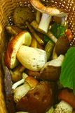 Boletus mushrooms close up photo in the basket Royalty Free Stock Image