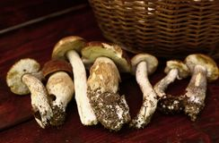 Boletus mushrooms close up photo in row in wooden bench Stock Photography