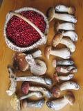 Boletus mushrooms and cranberries Stock Images