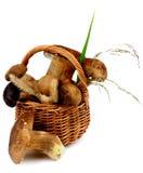 Boletus Mushrooms Stock Images