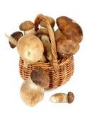Boletus Mushrooms Stock Photo