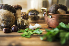 Boletus mushrooms. With garlic and parsley Stock Images