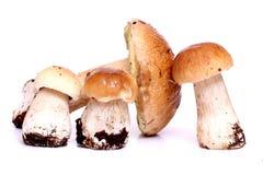 Boletus mushrooms on white Royalty Free Stock Image