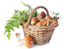 Boletus mushrooms in wicker basket Royalty Free Stock Images
