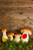 Boletus mushrooms on wooden background Stock Photo