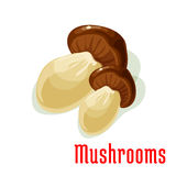Boletus or porcini edible mushroom cartoon icon Stock Image