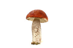 Boletus stands vertically Royalty Free Stock Photos