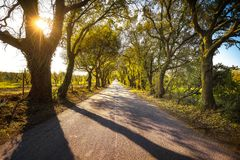 Bolgherese road, autumn or fall, tree straight at sunrise. Marem Royalty Free Stock Photo