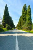 Bolgheri著名柏树大道横向。 托斯卡纳地标,意大利 免版税库存图片