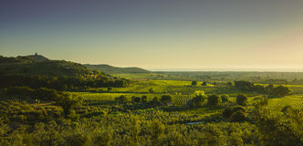 Bolgheri and Castagneto vineyard aerial panorama on sunset. Mare Royalty Free Stock Photo