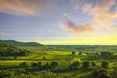 Bolgheri and Castagneto vineyard aerial view on sunset. Maremma Tuscany, Italy. Europe stock photo