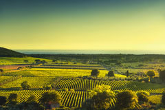 Bolgheri and Castagneto vineyard aerial view on sunset. Maremma Stock Photo