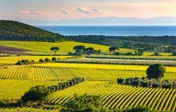 Bolgheri and Castagneto vineyard and Elba island. Maremma Tuscan Royalty Free Stock Photography