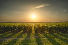 Bolgheri and Castagneto vineyard on sunset in backlight. Maremma Royalty Free Stock Photos
