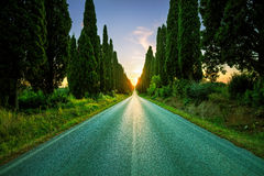 Bolgheri famous cypresses tree straight boulevard on backlight s Royalty Free Stock Photo