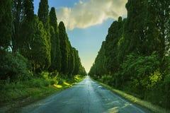 Bolgheri famous cypresses tree straight boulevard on backlight s Stock Photos