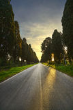 Bolgheri famous cypresses tree straight boulevard on backlight Stock Images