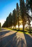 Bolgheri famous cypresses tree straight boulevard. Maremma, Tusc Royalty Free Stock Photo