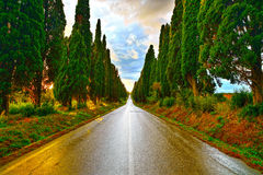 Bolgheri famous cypresses tree straight boulevard on sunset. Mar Stock Photo