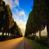 Bolgheri famous cypresses tree straight boulevard on sunset. Mar Stock Image