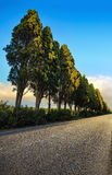 Bolgheri famous cypresses tree straight boulevard on sunset. Mar Royalty Free Stock Photography