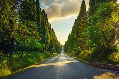 Bolgheri famous cypresses tree straight boulevard on sunset. Mar Royalty Free Stock Photo