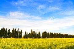 Bolgheri famous cypresses trees boulevard landscape. Maremma, Tu Royalty Free Stock Photography